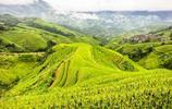 梯田景色很好 建議坐纜車 整個梯田景區的壯觀一覽無餘 金坑梯田