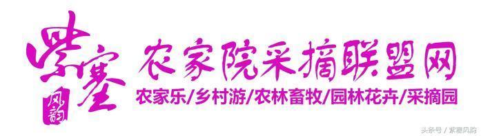 京津冀13城農家院旅遊系列四十六:娟子玉龍灣海景日租公寓