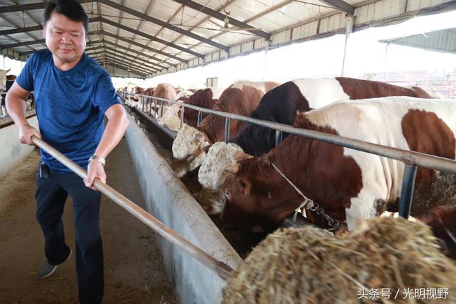 河南出現養牛達人,一頭牛重2000斤,40戶村民靠它脫貧致富