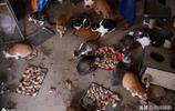 老太太13年救助流浪貓,收養1000餘隻,丈夫受不了分居10多年