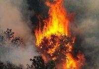 擁有悠久歷史的瀋陽棋盤山著火了,這是不是全人類的損失?