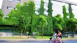 蘇州大學獨墅湖校區多棟建築爬山虎成校園內最美風景,為歷史文化積澱深厚的蘇州大學增添優美人文景觀