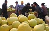 吃柚子的季節,5個挑選柚子小竅門,讓你買到皮薄水多香甜的柚子