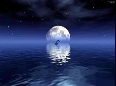 美文:月夜聽蟬