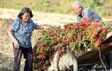 70多歲的老人開荒種野菜,城裡人沒吃過
