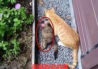 主人發現貓咪不見了,來到院子裡一看,差點要吐出來