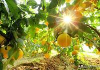 地球上最健康的水果,每一種都能預防健康問題