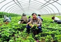科技星火,點亮農業轉型之路