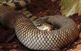 恐怖的9大蟒蛇