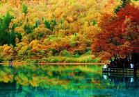 罕見絕美楓葉秋色,太漂亮了,快分享給朋友吧!