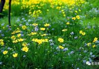 五月的天,草木欣然,聆聽8首春天意境的古典音樂