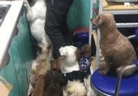 """養了16只狗,她直言剁肉時全世界都安靜了,網友:""""富""""二代"""