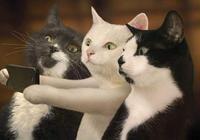 貓咪動作很奇怪,兩隻小爪子一直緊緊的壓著,主人扒開後笑哭了