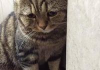 貓咪犯錯主人剛想教訓下它,網友:就這表情,家拆了都下不了嘴