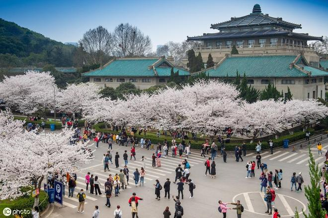 武漢大學的櫻花怎能錯過?再擠也要預約去看看!
