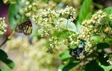 蝶戀花,蝴蝶眼裡的世界