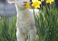 動物也臭美以花為伴「太可愛了,快分享給朋友吧!」