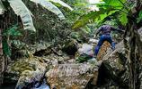 風景圖集:幕布下的小溪流