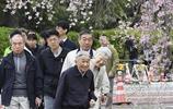 日本明仁天皇月底即將退位,最後一次微服出宮觀賞櫻花