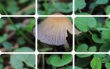 暖哭,天天向上的小蘑菇