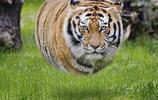 當動物們胖起來的時候,圓滾滾的樣子好可愛!ins:ditpict