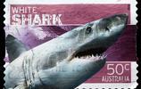 動物圖集:噬人鯊——對人類三大危險鯊魚之一