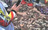 """再見了紅蟲!今年釣魚流行這""""魚餌"""",大魚小魚跑不了"""