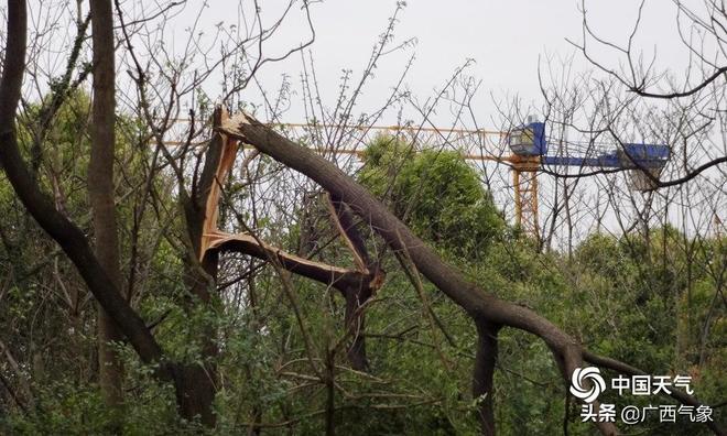 17級大風來襲 廣西臨桂多處房屋屋頂被掀 大樹遭連根拔起