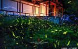 仲夏夜之夢——南京東郊紫金山邂逅螢火蟲