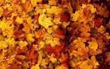 深秋裡隱藏在大自然景色中的模特兒,你能一眼找出他們在哪嗎?