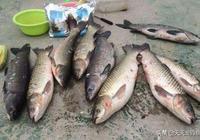 玉米餌料配方大全,不用商品餌,也能釣大魚