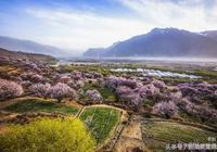林芝三月桃花開,恣意嫣紅連天外——記西藏·林芝