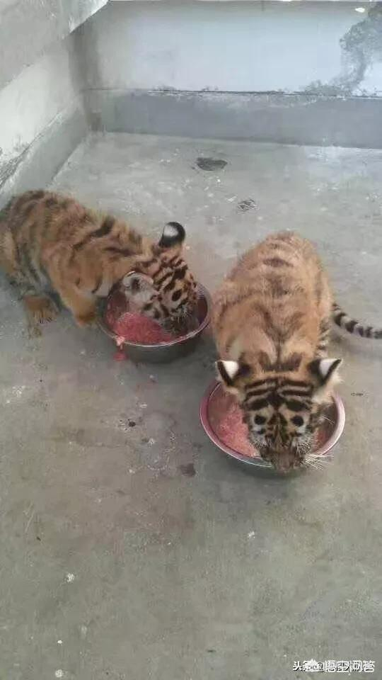 服務員上錯菜但已經吃掉了,朋友堅持是店家的過錯拒絕付這份菜的錢,合理嗎?