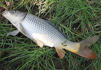 跑鉛野釣釣大魚,跑鉛釣法