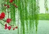 小草明明是綠色的為什麼說是青青的小草?