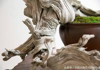 中國 · 盆景藝術