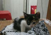 撿了一隻小奶貓被室友嫌棄醜,沒想到長大後這麼漂亮,眼睛好美!