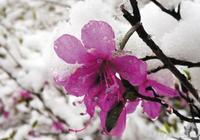 黑龍江立夏下起大雪