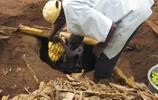 這酸爽,烏干達人直接用腳踩香蕉釀酒,外國女孩喝過後表情亮了