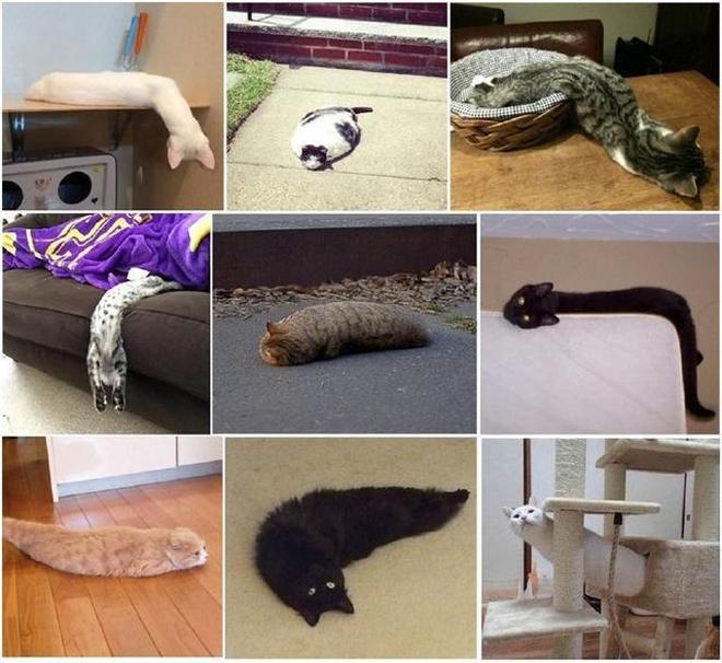 貓咪真的是液體,看完這15張圖我就真的信了!