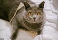 貓會故意繞遠路,為了迷惑其他動物,貓還會有意走錯方向