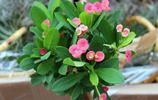 估計沒人知道!這12種適合在家養的植物,一個月不澆水都沒事