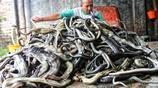 """奢侈品背後的""""血腥"""":揭祕蛇皮包的殘忍製作過程"""