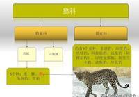 豹子的家族成員:原來豹子還分這麼多類型!