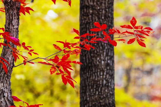秋天,一杯烈酒勾起了往昔的回憶,紅了一地寂寞