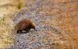 動物圖集:自然界的動物