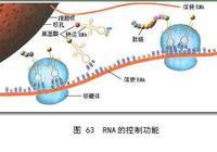 細胞——超級生物計算機
