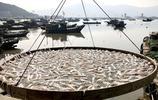 漁民們為啥在漁港的岸邊砌了許多土灶臺,你知道它有什麼用嗎?