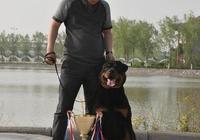 羅威納犬應該怎樣去飼養?