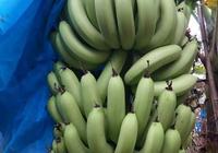 為什麼湛江地區只有雷州、徐聞這個兩個地方種植香蕉比較多呢?